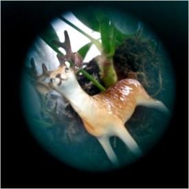 A friendly Deer in the Kingdom