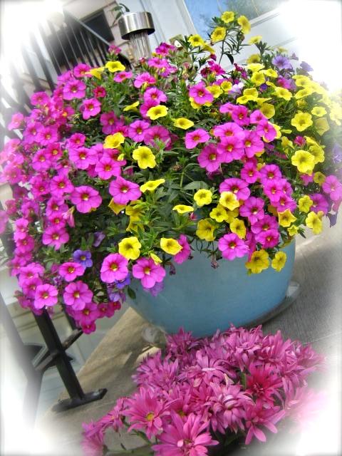 Boomdeeadda Blooms