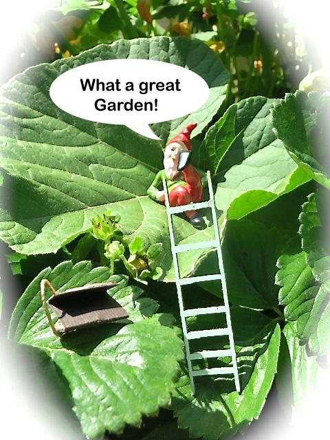 Great Garden Alys!