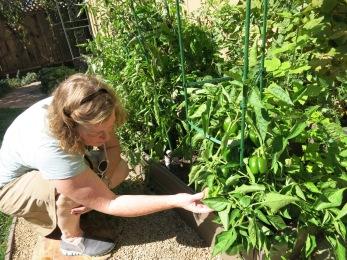 A sunny California Gardener