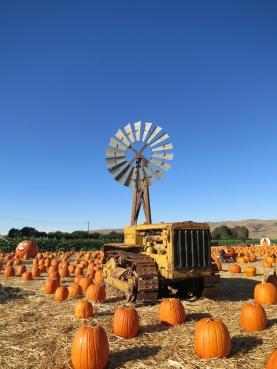 Blue skies and Pumpkin Pies
