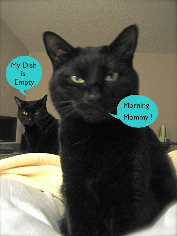 morning mommy