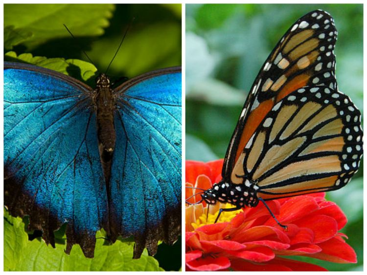 Paulines Butterflies