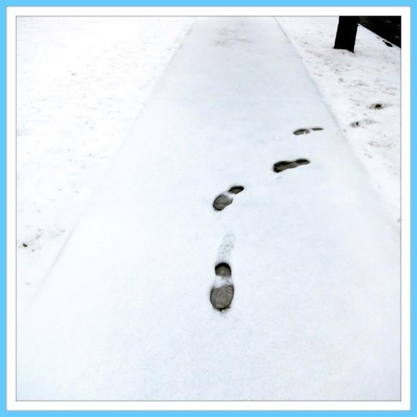 Northern Boomdee Tracks