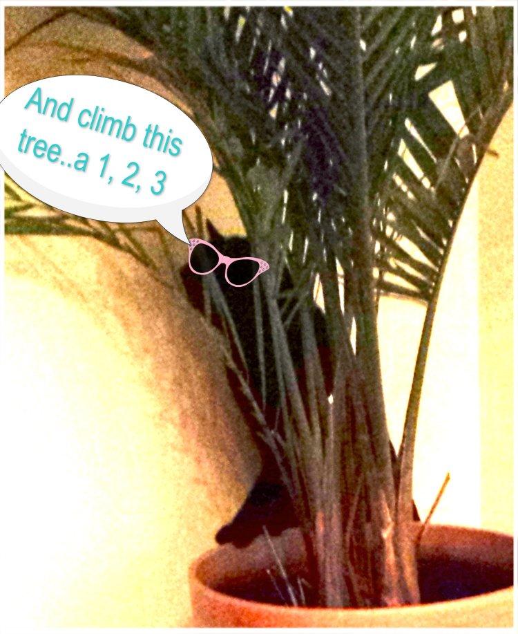 climb this tree, 123