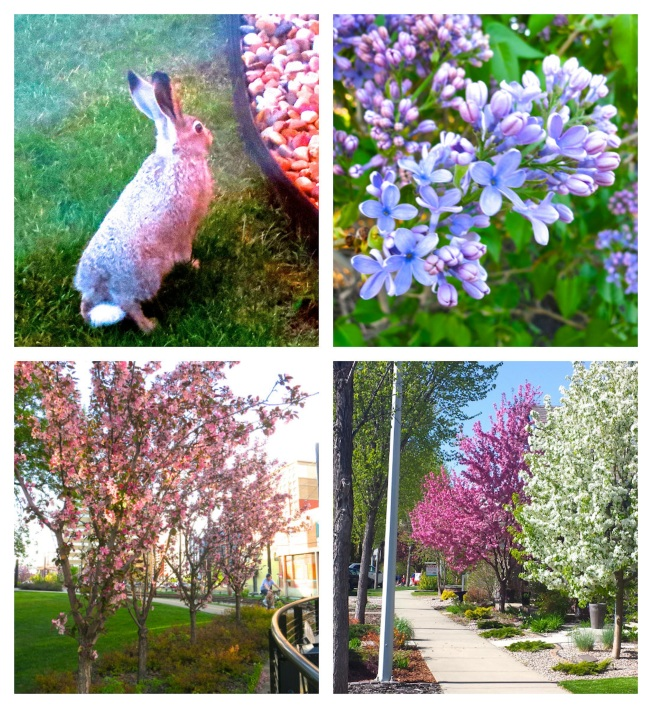 Boomdeeville in spring