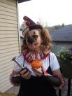 Oh dear, My pumpkin shrunk