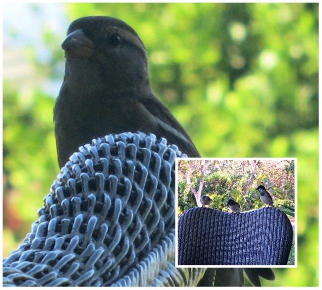 birdie collage