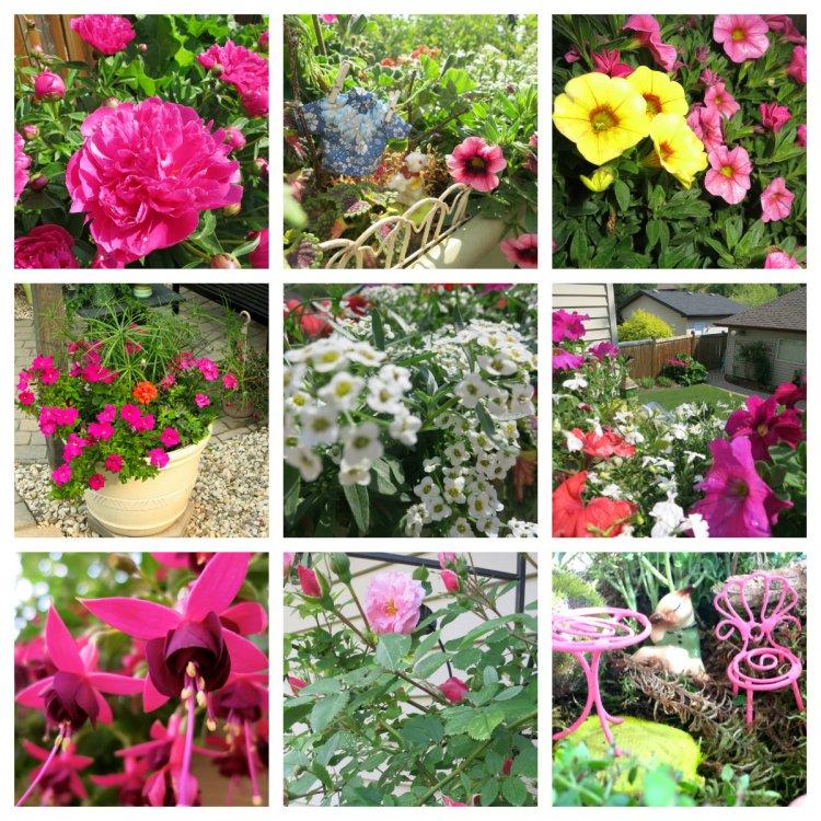 garden 2015 collage
