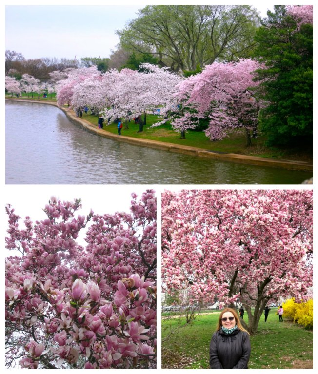 blossom tim collage